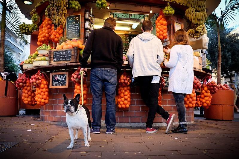 Hund väntar på frukt.