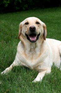 God tandhälsa genom regelbundet bruk av hundtandkräm